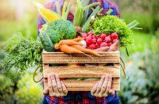 verdura, frutta e pesce di stagione